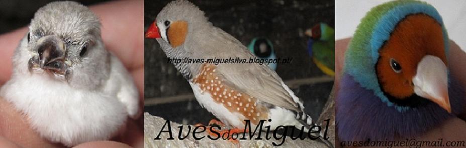 AvesdoMiguel