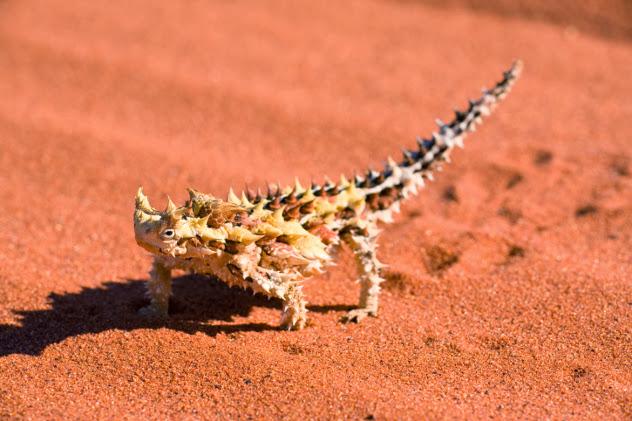 Mahluk Padang pasir