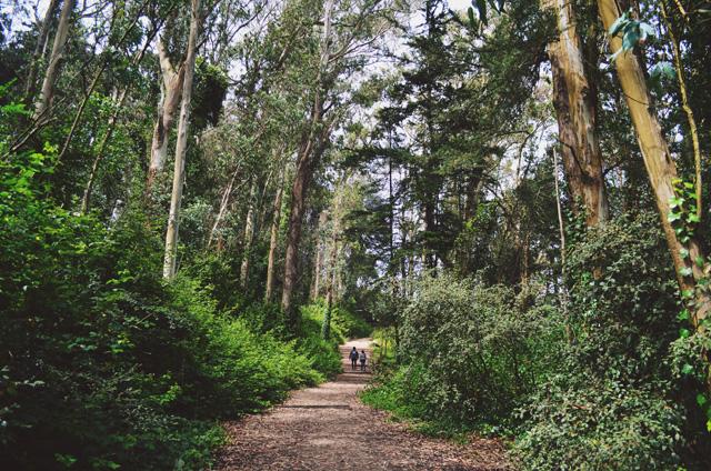 mt davidson hike