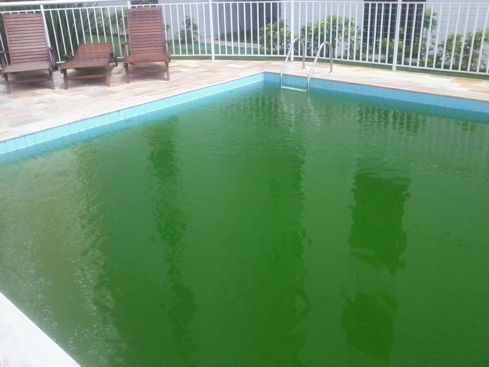 piscinas como eliminar algas
