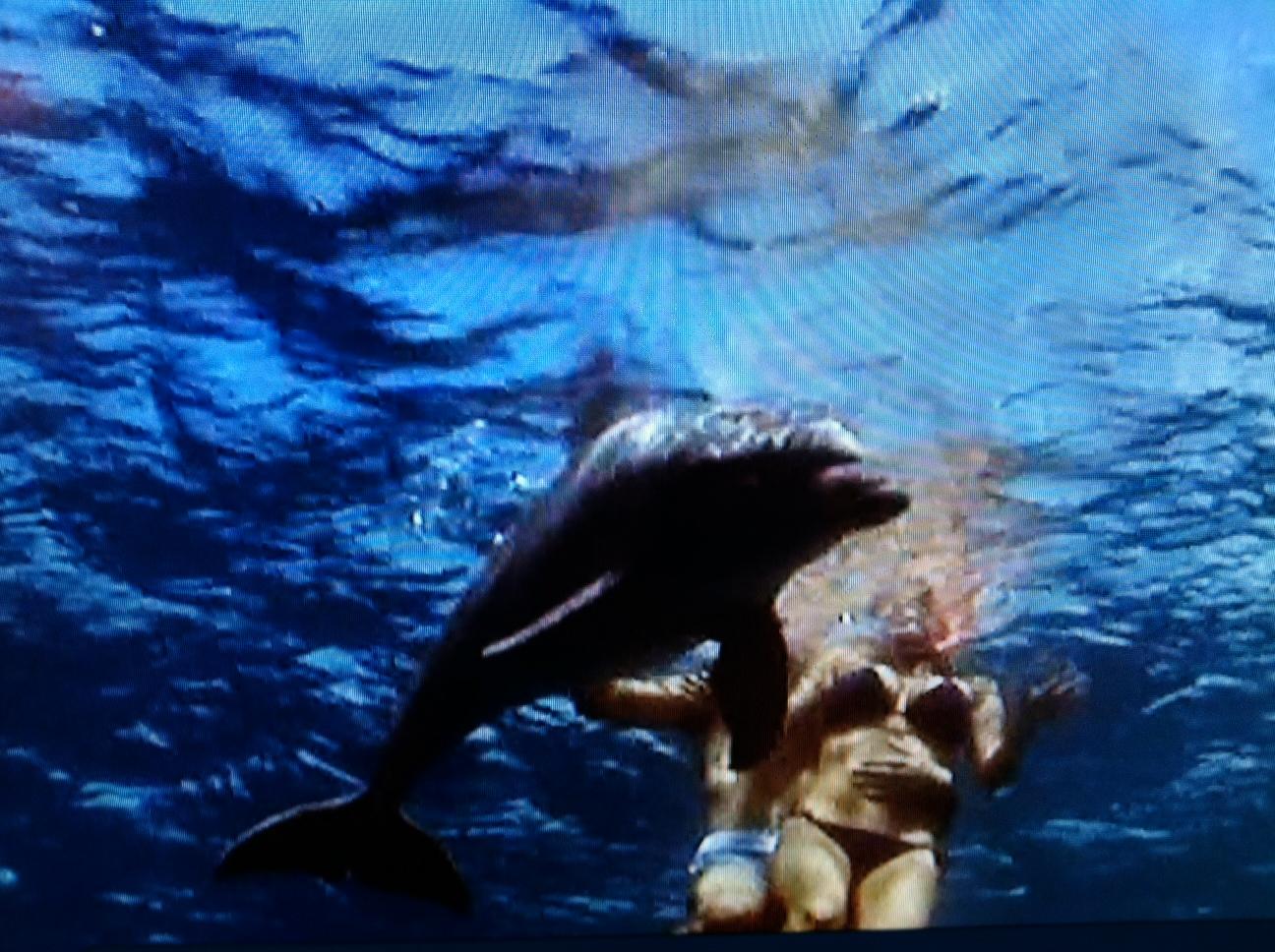 dolphin fucks a woman