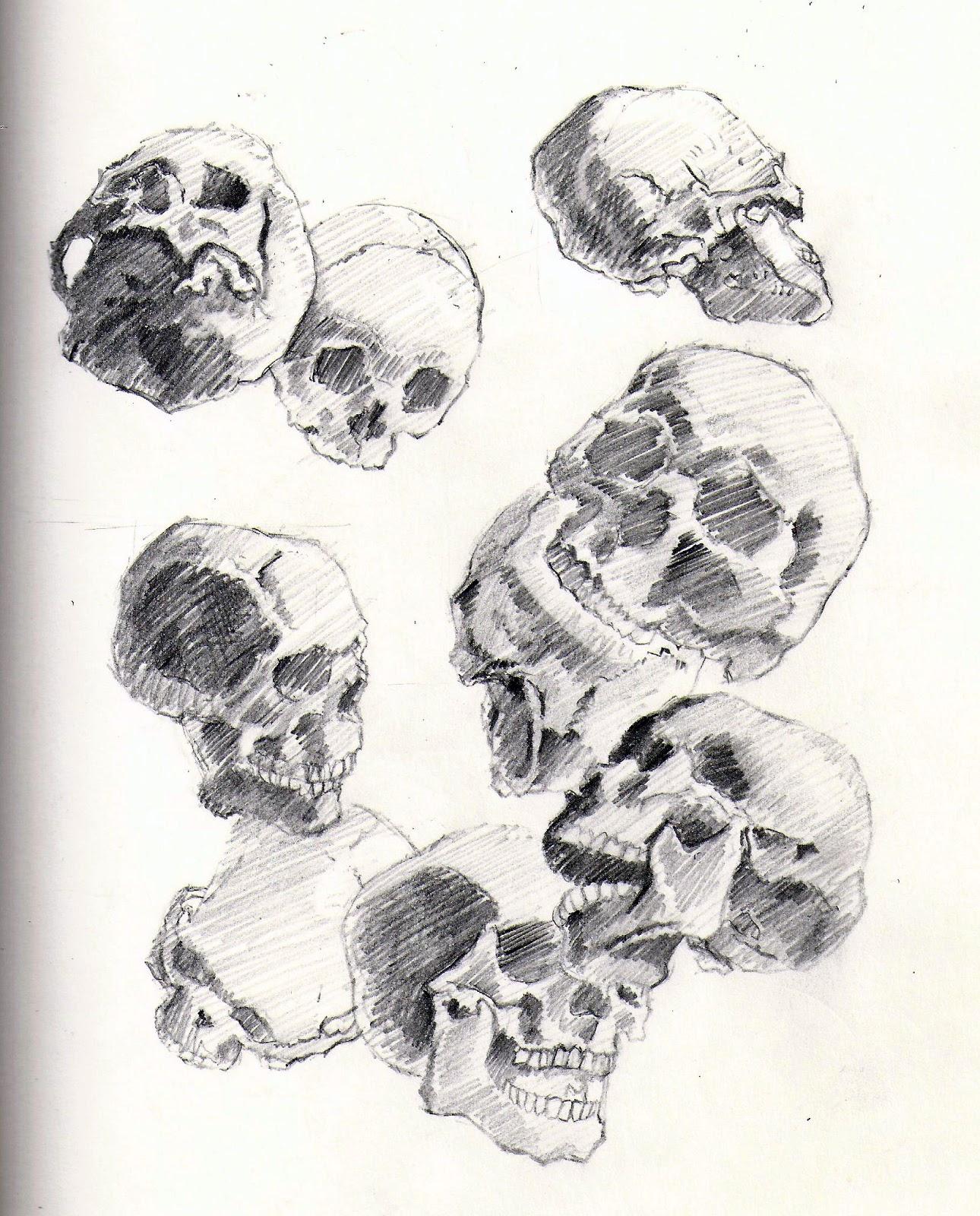 Jays Illustration Skulls From Atlas Of Human Anatomy For The Artist