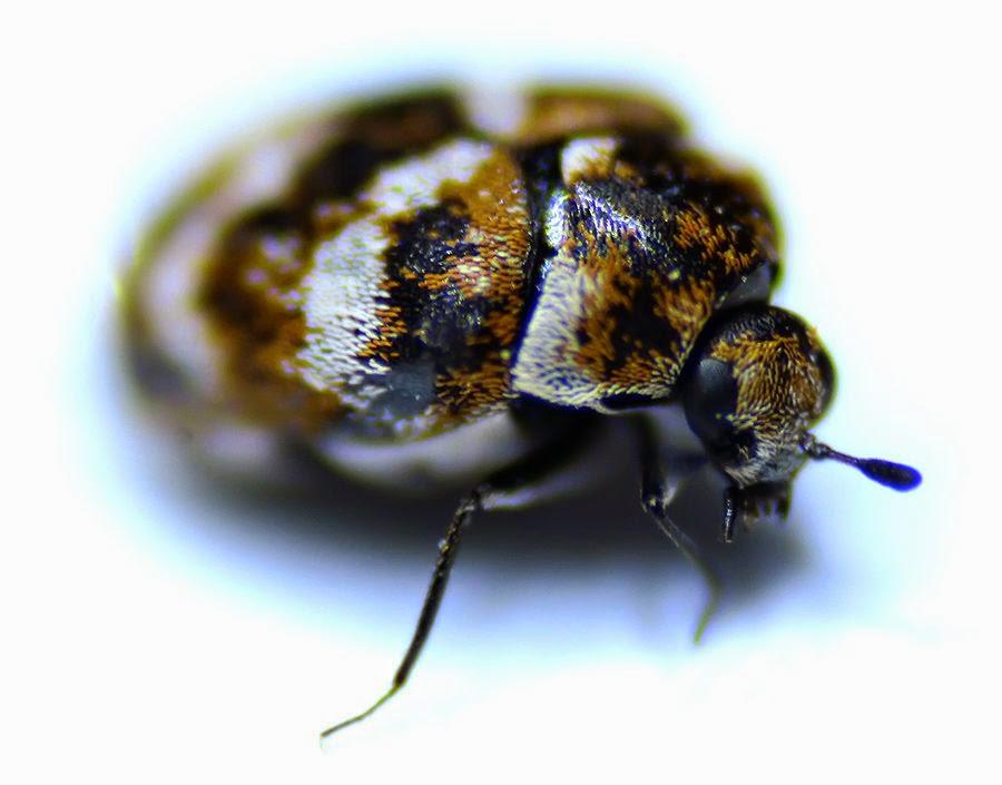 zdjęcie makro robaka