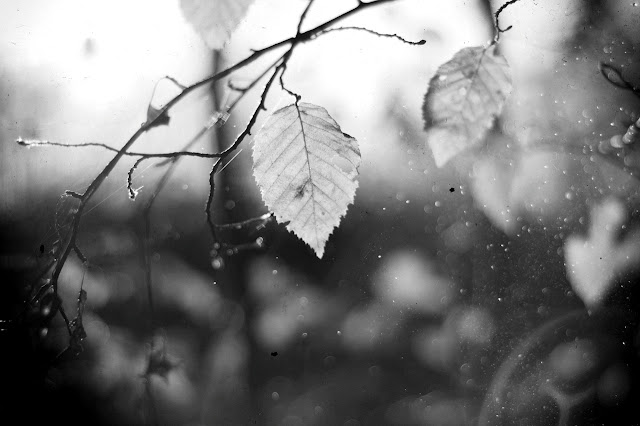 Black and white photography of Leaves