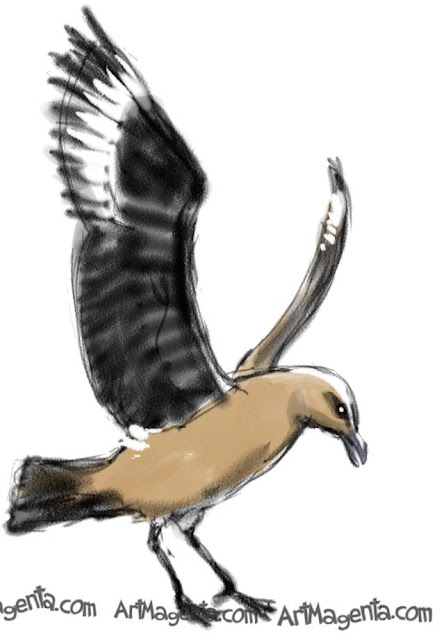 Great Skua is a bird sketch by illustrator and artist Artmagenta