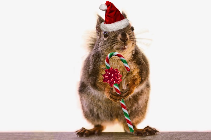 christmas, squirrels, funny christmas