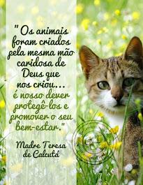 ANIMAL NÃO É BRINQUEDO