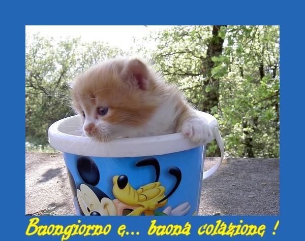 Romanticons club buongiorno romanticons for Buongiorno o buon giorno immagini