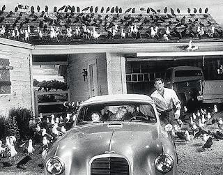 Los Pájaros , Alfred Hitchcock