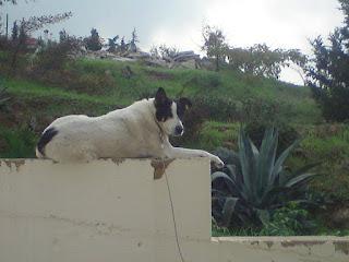Χάθηκε χθες στο Ρετζικι τυφλό σκυλάκι