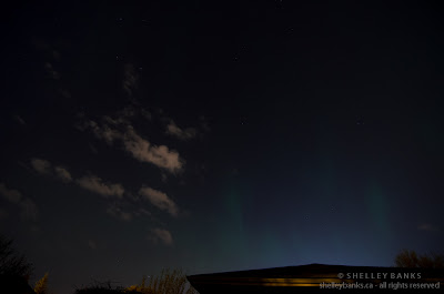 Northern Lights, seen from Regina, Saskatchewan, backyard. Photo © Shelley Banks, all rights reserved.