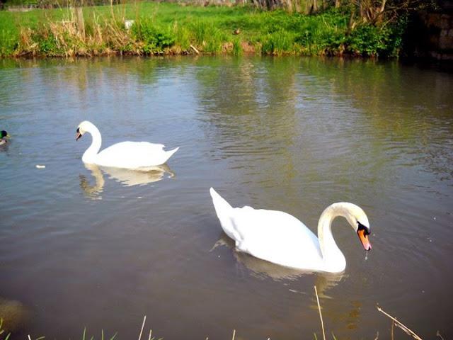 Witney, England