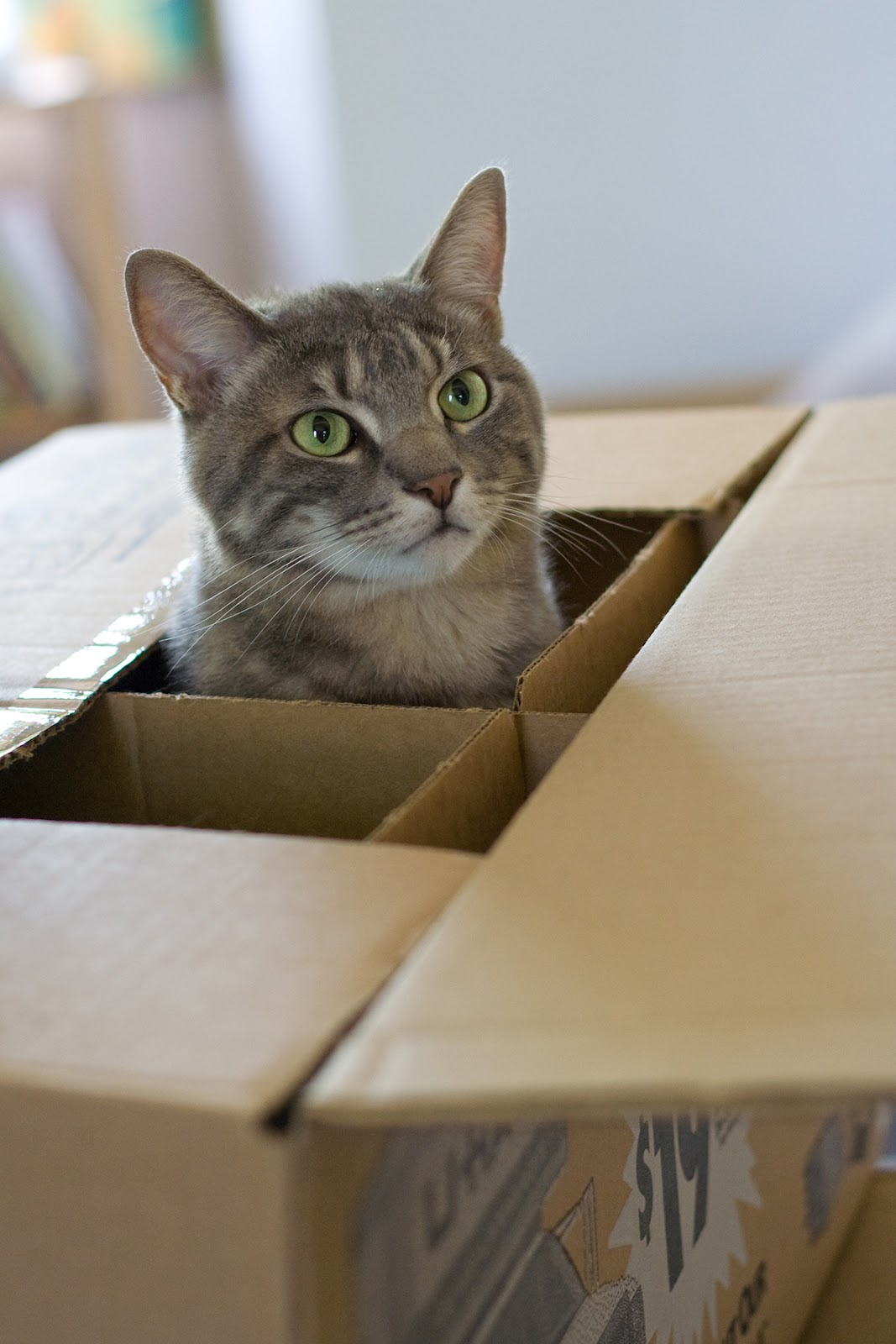 Cat In A Box 174 Pictures Pinteresting Pictures