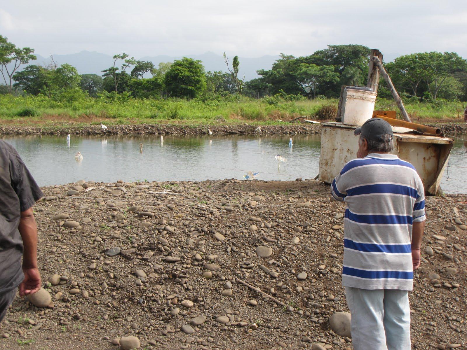 Llano extremo la creatividad aplicada a la piscicultura Lagunas para cachamas