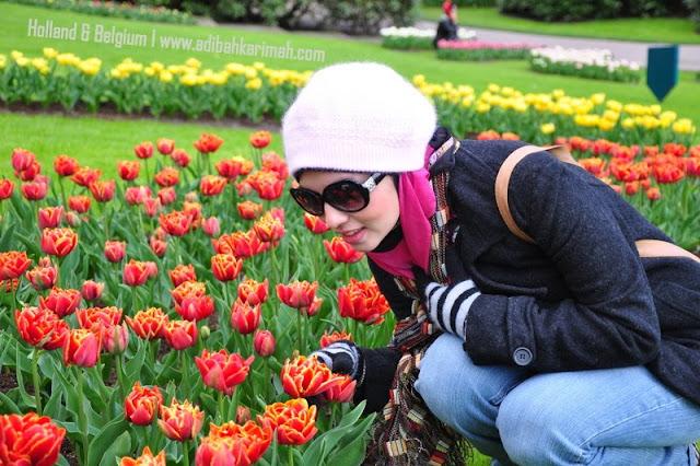 Free holiday trip to Holland and Belgium for premium beautiful di taman tulips terbesar