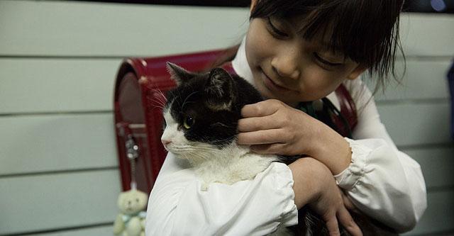 映画 4/猫 ねこぶんのよん
