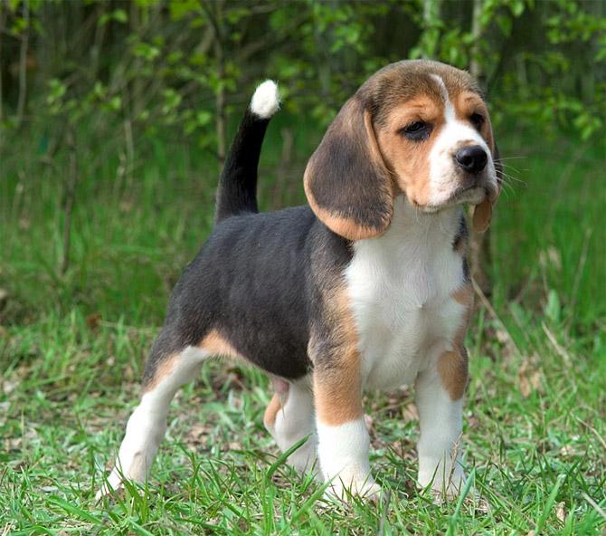 cute animals  top 20 cutest dog breeds