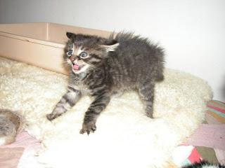 Funny Cute Kittens
