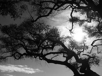 Mi blog de fotografía.