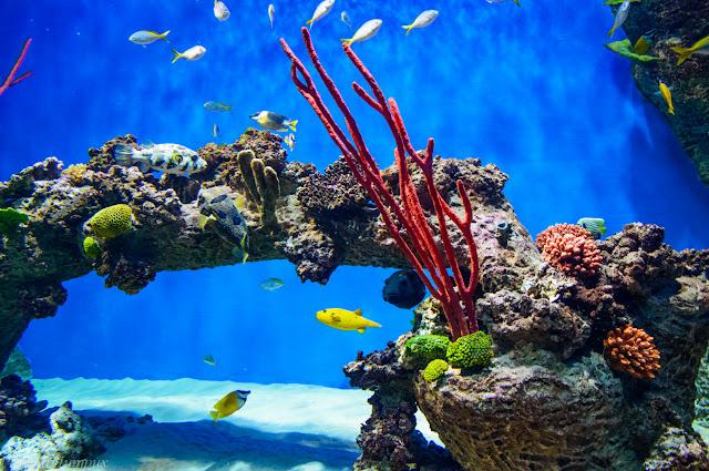 Путешествия: Москвариум Коралловый риф фото