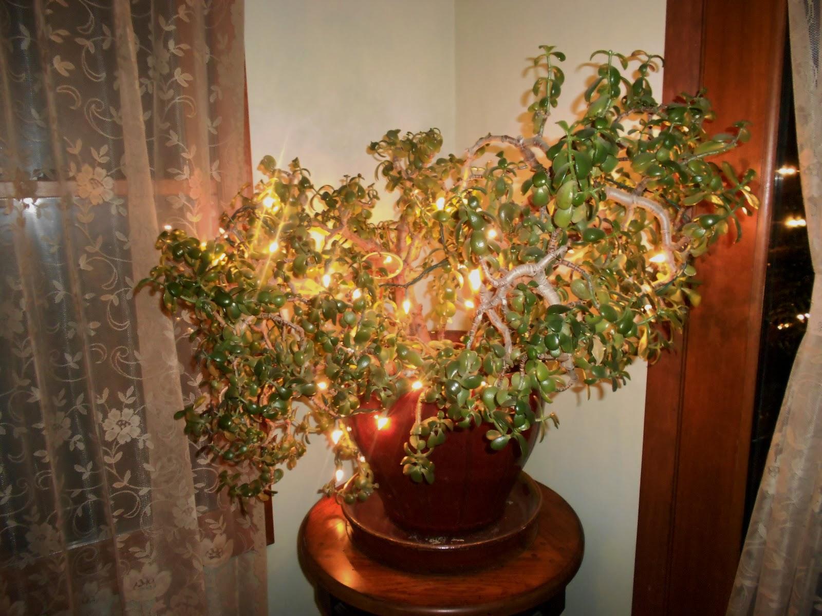 Splashes Of Joy Christmas Decorations