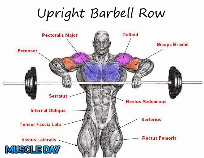 Shoulder Exercises - Upright Barbell Deltoid Rows | Muscle Day