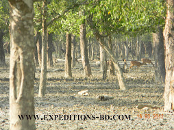 sundarbans tour Bangladesh