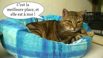 Un chat du Chat Libre de Toulouse sur un gros coussin moelleux.