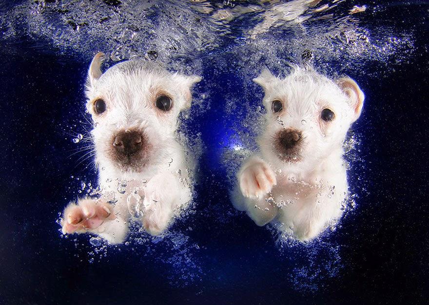 cachorros bajo el agua