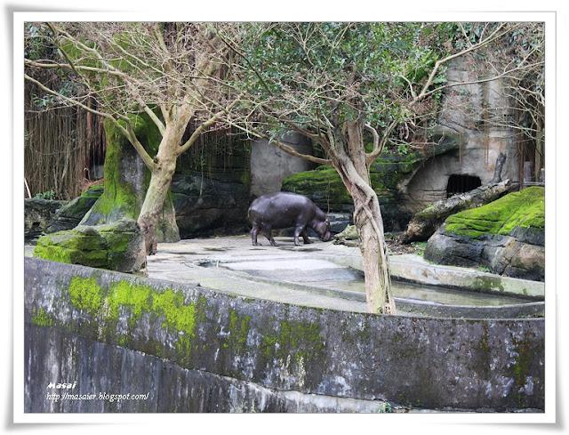 木柵動物園Taipai Zoo