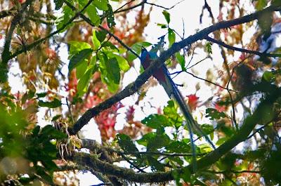 Fotografías del quetzal en la Reserva de la Biosfera el Triunfo de Chiapas. Ecobiosfera y Fondo de Conservación el Triunfo. Fotografía Chico Sánchez