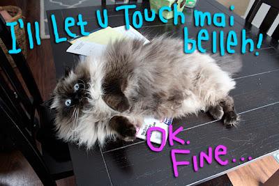 fluffy-cat-belly03