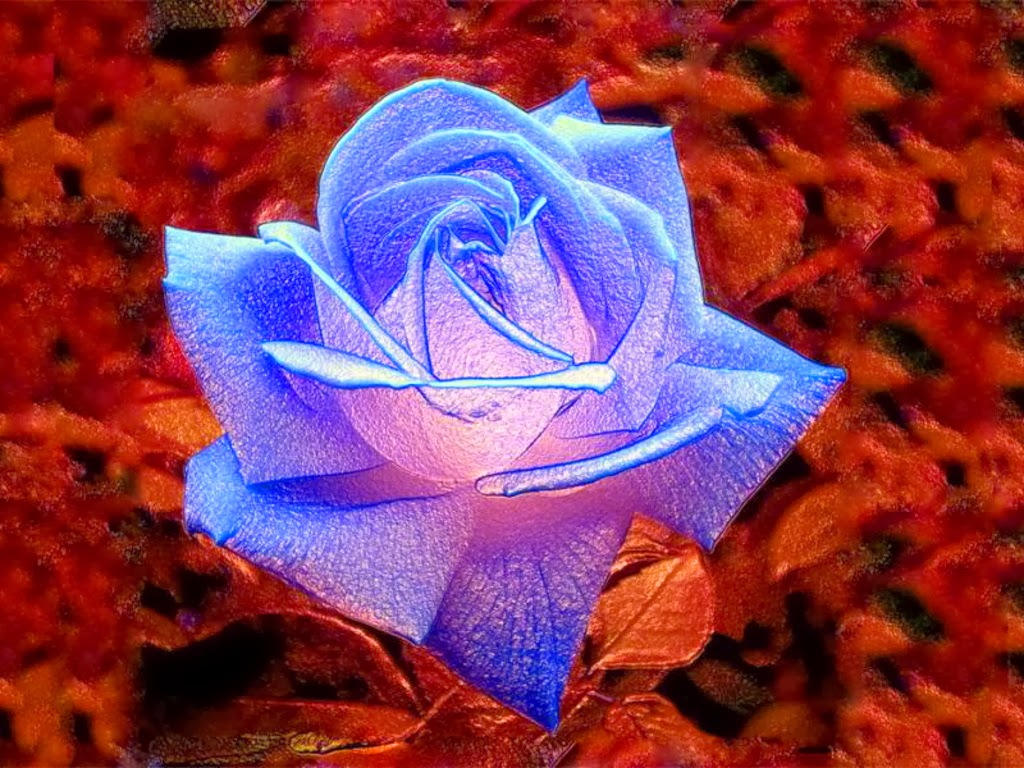 Romantic Blue Rose Flowers Image