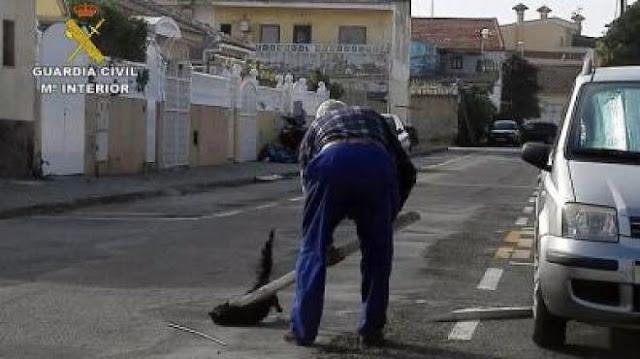 Detenido por matar a golpes a un gato en plena calle en San Pedro del Pinatar