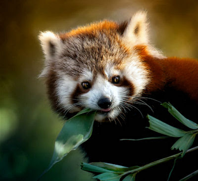 Un lindo animalito muy peludo llamado Firefox