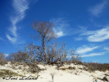 Winter at the beach on Long Island Sound by Toni Leland