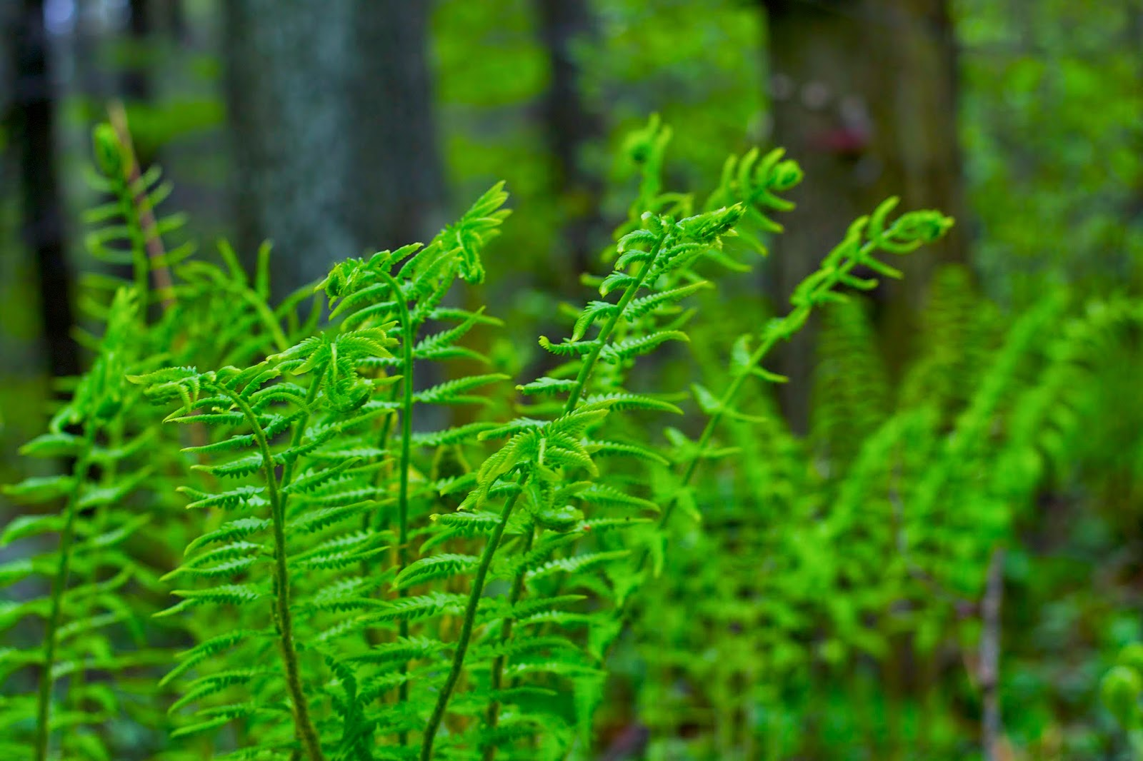 Vibrant green ferns.