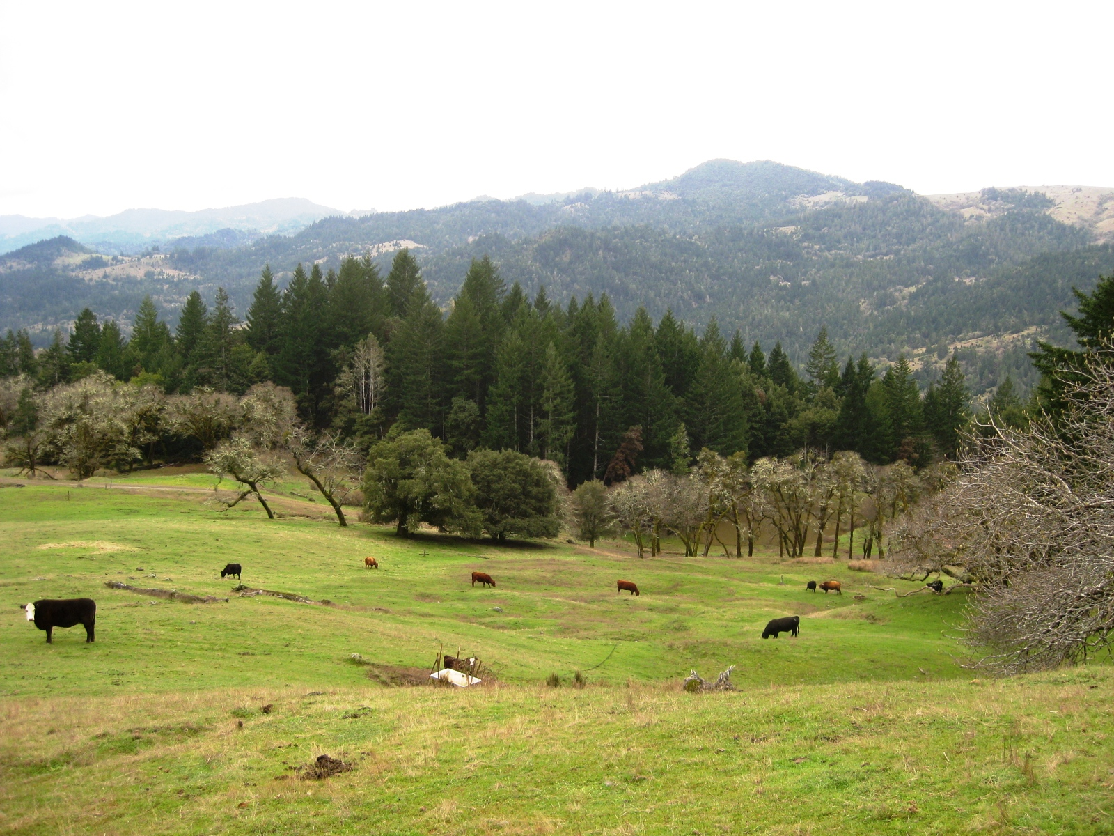 chapman ranch The chapman ranch is a small family owned and operated timber and livestock business whose aim is to live simply and ranch sustainably.