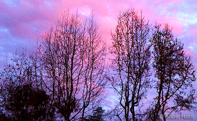 December Sunset with Bare Trees