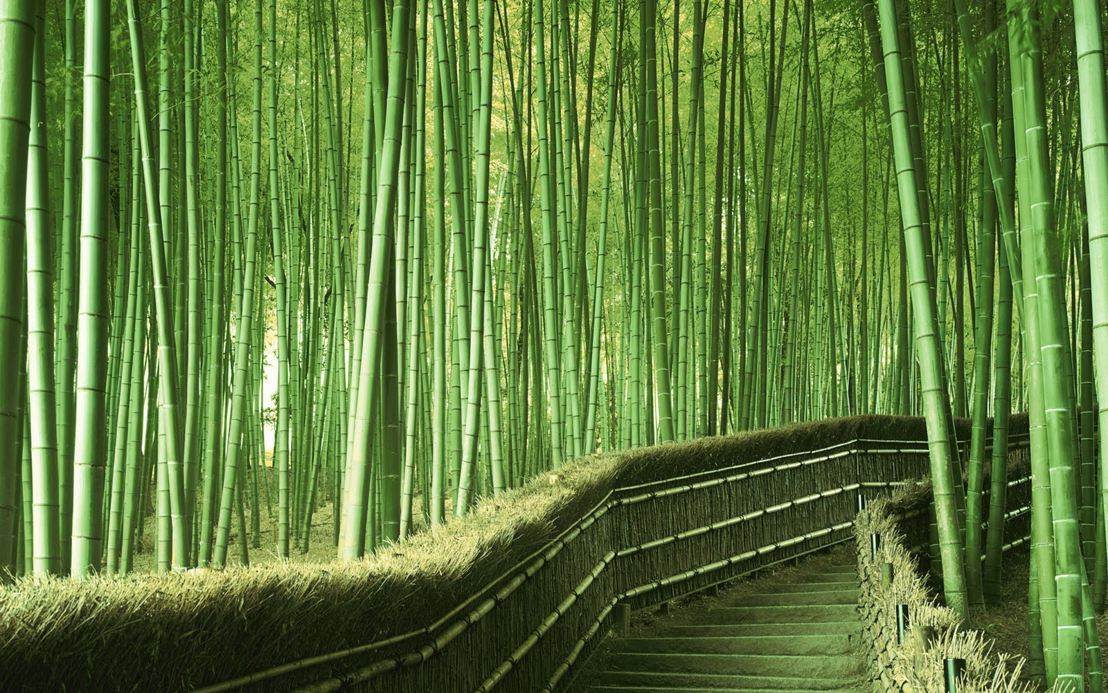 Hd bamboo plant wallpapers desktop wallpapers for Bamboo wallpaper