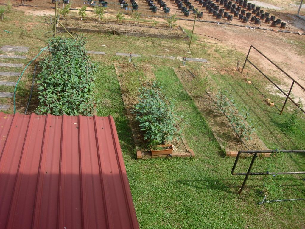 Landscape Rectangular Garden