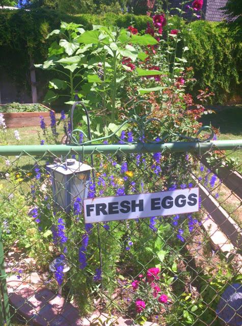 chickens, cottage garden,
