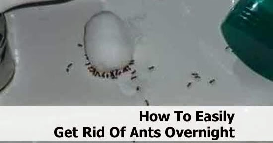 How To Easily Get Rid Ants Overnight DIY Craft Projects