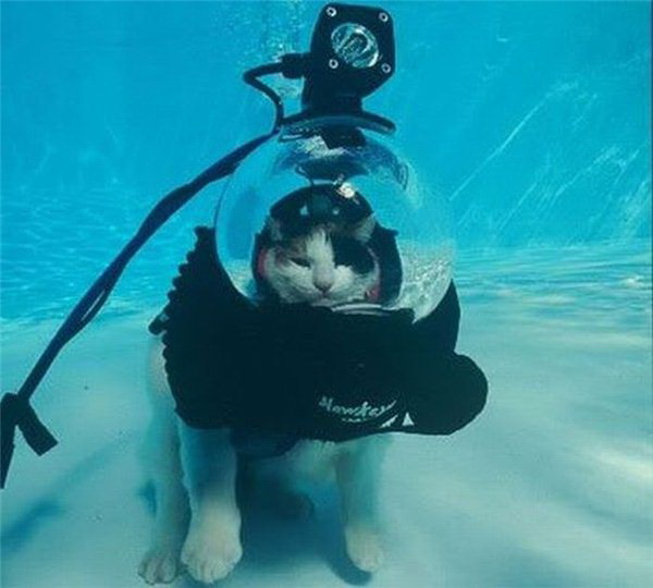 under water cat is amused funny cat pictures