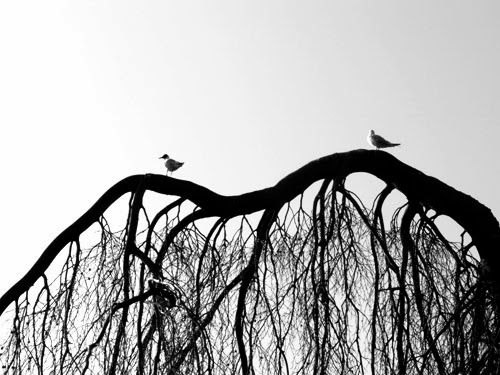 Graphic Art in Nature 1 - black and white photography