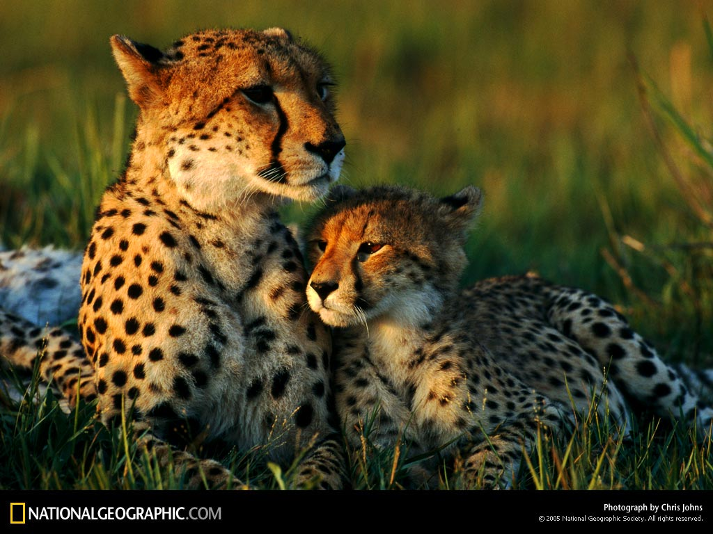 photography moments animal mother and baby 4 national