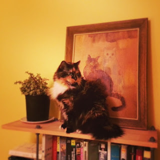 cat, pollyannacowgirl, polly conway, maine coon, droste effect
