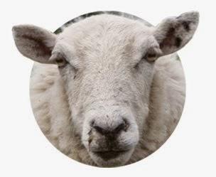 He apadrinado una oveja de WAK