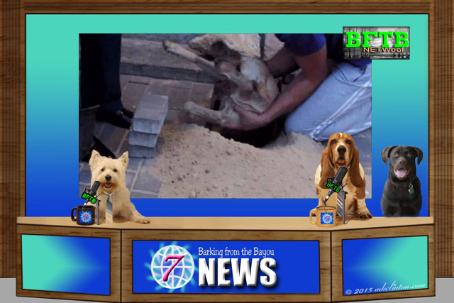 BFTB NETWoof dog news set with three dog co-anchors