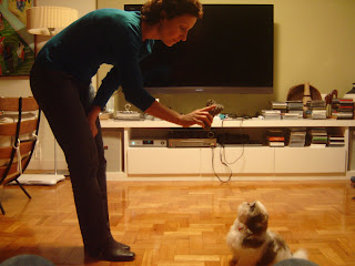 brinquedo-filhote-cachorro